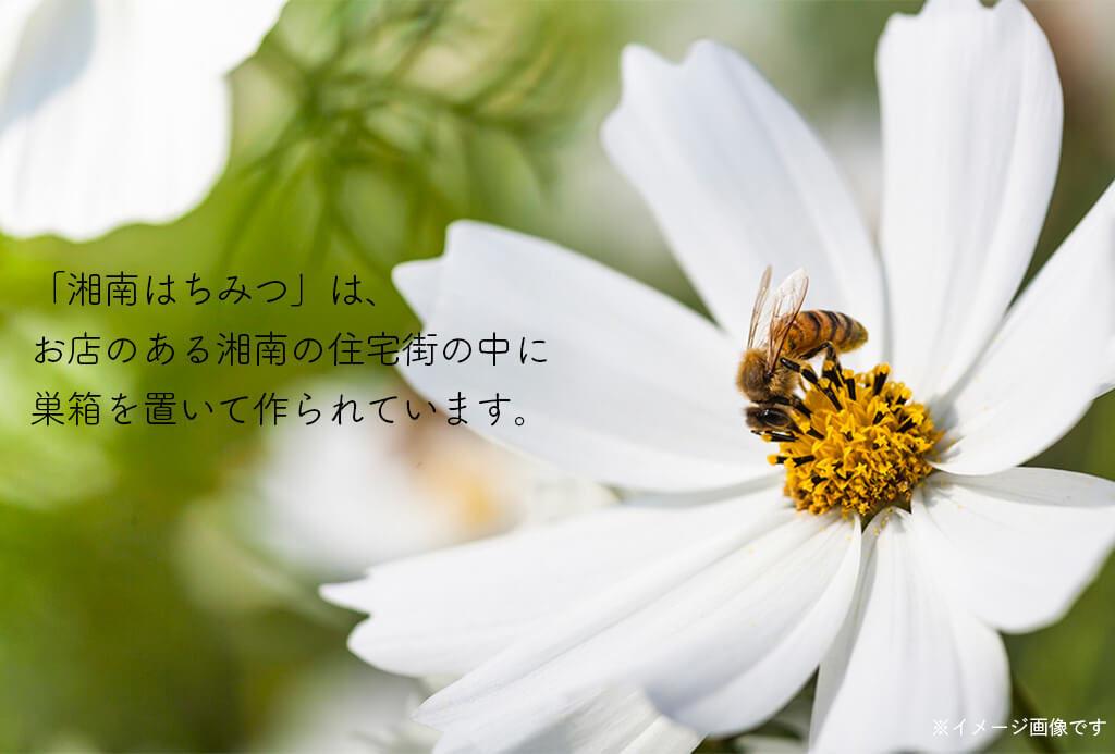 ハッピーナッツカンパニー 湘南のハチミツハニーローストナッツ